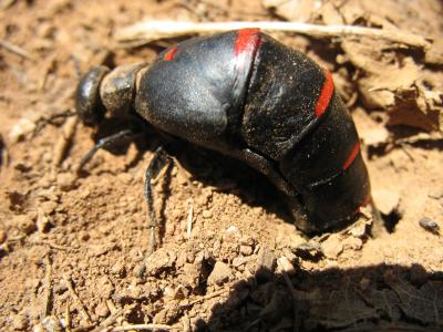 black_and_red_bug