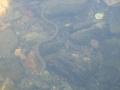water_snake