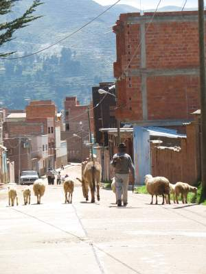 sheepherder-copacabana