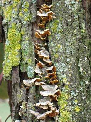 mushroom13