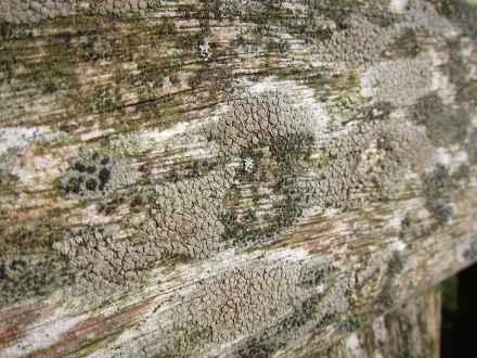 Lichen on Bench