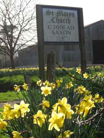 Daffodils by Saxon church, West Sussex, UK