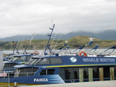 Whale watch boats at wharf at South Bay Kaikoura