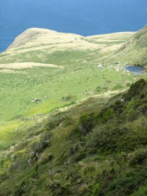 On the track to Lover's Leap, Otago Peninsular, New Zealand