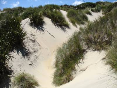 Sand dunes en route to Sandfly Bay, Otago Peninsular, New Zealand