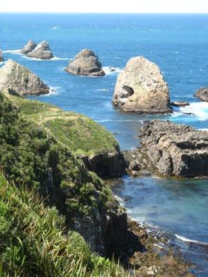 Nugget Point, Caitlins Coast, New Zealand