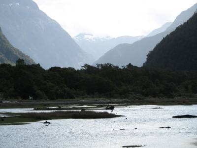 Milford Sound from the shoreline walk