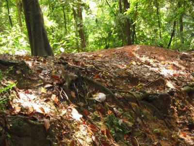 Leaf Cutter Ant mound