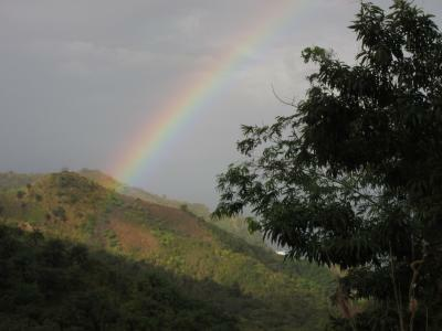 Rainbows in the rainforest