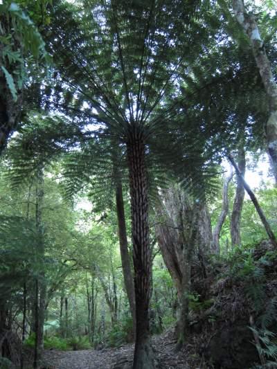 Fern tree
