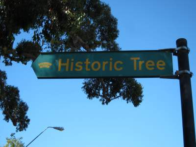 Historic Tree sign
