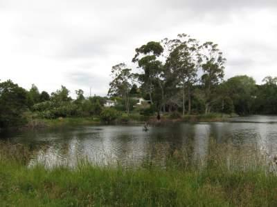 Te Puia Springs