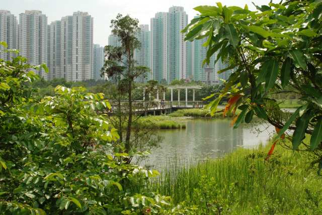 high rise buildings overlooking wetland centre
