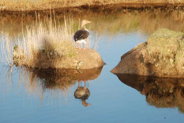 Reflecting bird, Dunwich, Suffolk
