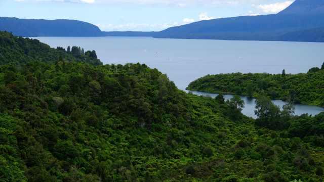 Native bush surrounding Lake
