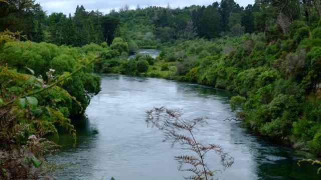 Calm Waikato river and native bush