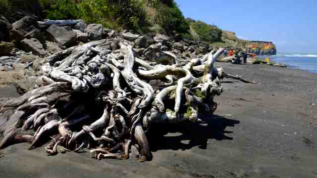 Driftwood pile on beach