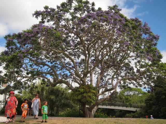 People standing under a Jacaranda Tree