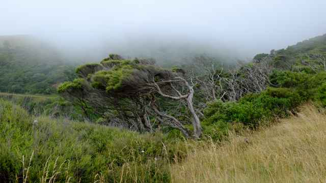 Trees shrouded in mist, Mt Karioi, Raglan